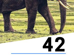 42 fiszki obrazkowe angielsko-polskie: Zwierzęta