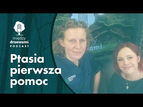 Między Drzewami #70 Ptasia pierwsza pomoc [dr Agnieszka Czujkowska] | PODCAST