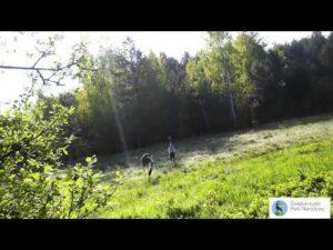 Read more about the article Żurawie w Świętokrzyskim Parku Narodowym