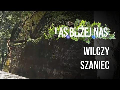 Read more about the article Las bliżej nas | NOWY SEZON | WILCZY SZANIEC |