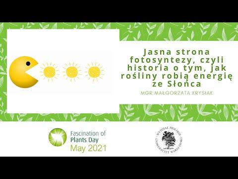 Jasna strona fotosyntezy, czyli jak rośliny robią energię ze Słońca –  mgr Małgorzata Krysiak