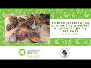 Read more about the article Smutek tropików: Co powinniśmy wiedzieć o uprawach palmy olejowej – dr Monika Mętrak