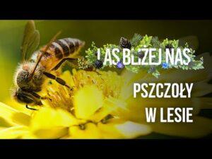 Read more about the article Las bliżej nas – Pszczoły w lesie
