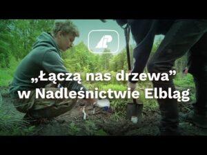 """Read more about the article """"Łączą nas drzewa"""" w Nadleśnictwie Elbląg"""