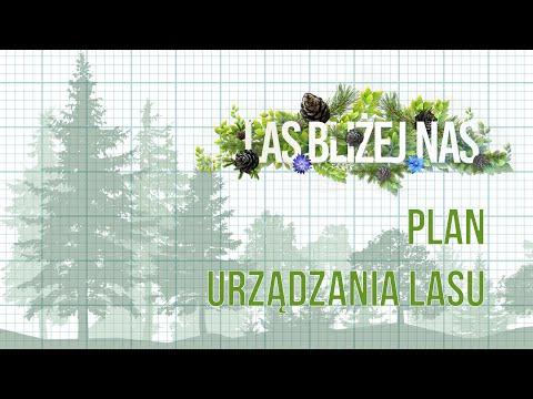 Las bliżej nas | NOWY SEZON | Plan Urządzania Lasu | odc. 3