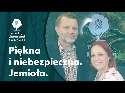 Read more about the article Między Drzewami #73 Piękna i niebezpieczna. Jemioła [dr Grzegorz Iszkuło] | PODCAST