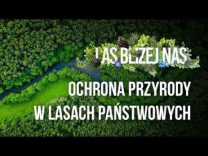 Read more about the article Las bliżej nas – Ochrona przyrody w Lasach Państwowych