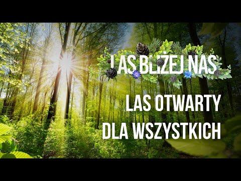 Read more about the article Las bliżej nas – LAS OTWARTY DLA WSZYSTKICH
