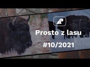 Read more about the article Prosto z lasu |10 2021|