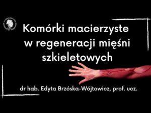 Read more about the article Komórki macierzyste w regeneracji mięśni szkieletowych – dr hab. Edyta Brzóska-Wójtowicz, prof. ucz.