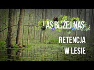 Read more about the article Las bliżej nas – Retencja w lesie