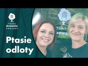 Read more about the article Między Drzewami #80 Ptasie odloty [Magdalena Stępińska] | PODCAST