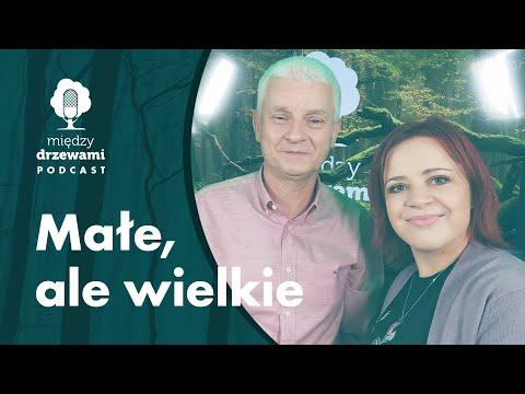 Read more about the article Między Drzewami #82 Małe, ale wielkie. O roli owadów w przyrodzie [dr hab. Tomasz Mokrzycki] PODCAST