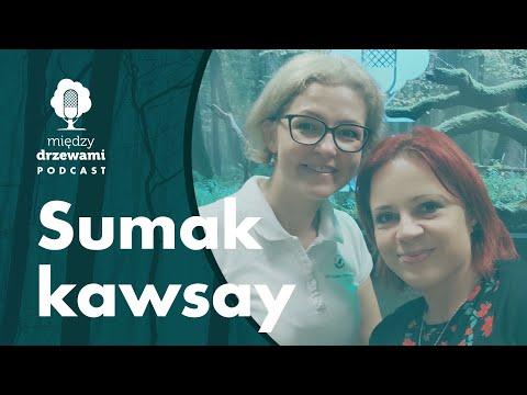 Read more about the article Między Drzewami #84 Sumak kawsay. O idei zrównoważonego rozwoju [Barbara Rymaszewska] | PODCAST