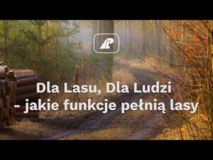 Read more about the article Dla Lasu, Dla Ludzi – jakie funkcje pełnią lasy