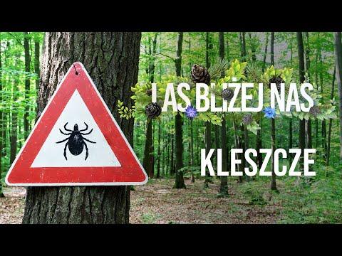 Read more about the article Las bliżej nas – Kleszcze