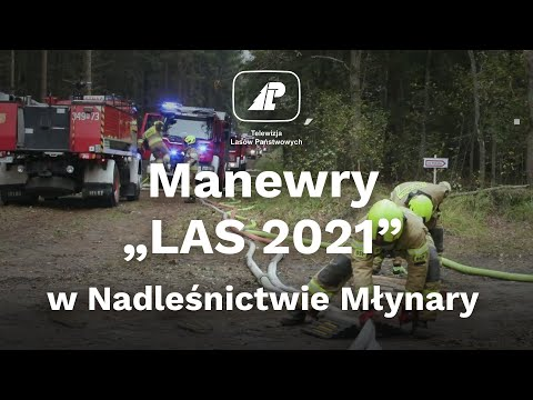 """Read more about the article Manewry """"LAS 2021"""" w Nadleśnictwie Młynary"""