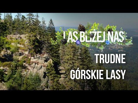 Read more about the article Las bliżej nas – Trudne, górskie lasy