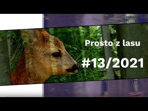 Read more about the article Prosto z lasu |13 2021|