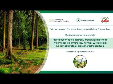 Read more about the article Przyszłość modelu ochrony środowiska leśnego w kontekście komunikatu Komisji Europejskiej